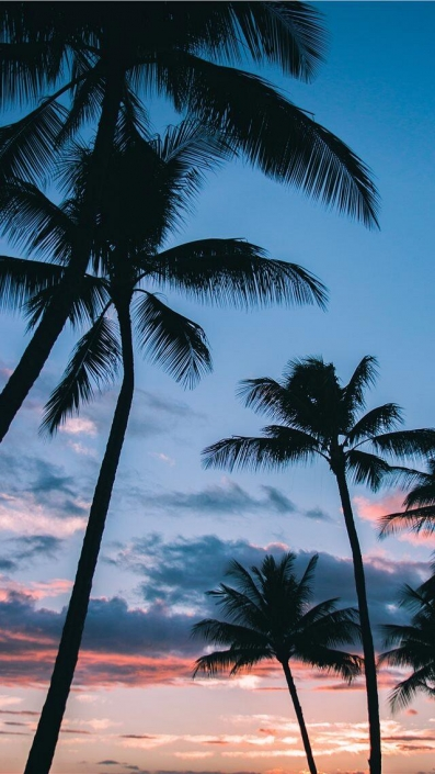 Palm Trees-iPhone Wallpaper